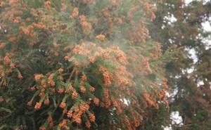 杉花粉 1